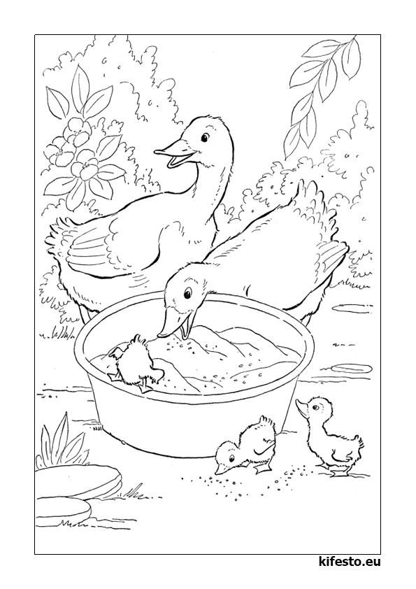The 23 Best Coloring Pages Farm Life Images On Pinterest