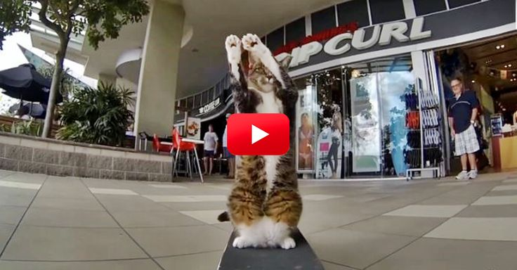 Whoa, Watch This Little Guy Go! | The Animal Rescue Site Blog