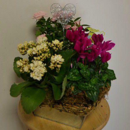 17 meilleures images propos de fleurs sur pinterest for Recherche plante
