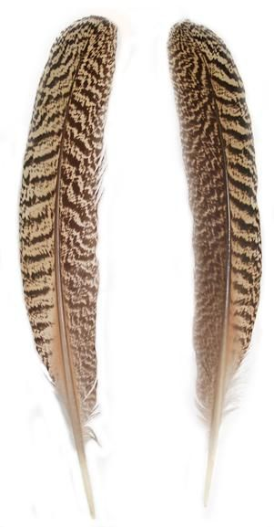 """Mottled Peacock Wing Quills 10"""" & Up - Per Pair"""