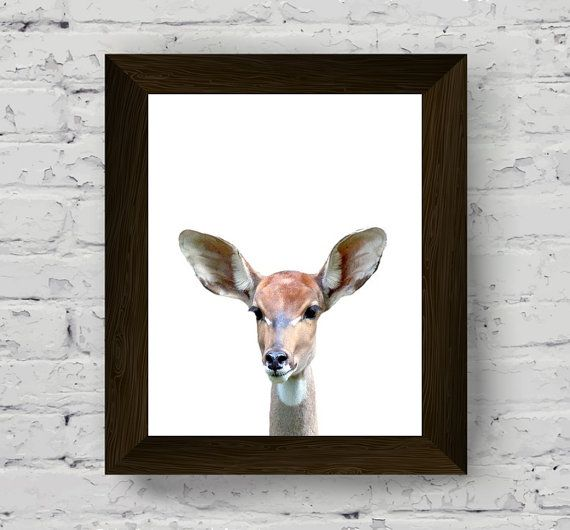 animal print nursery, antelope wall art, baby room prints, animal poster, wall art prints, animal photography, instant download, animal art