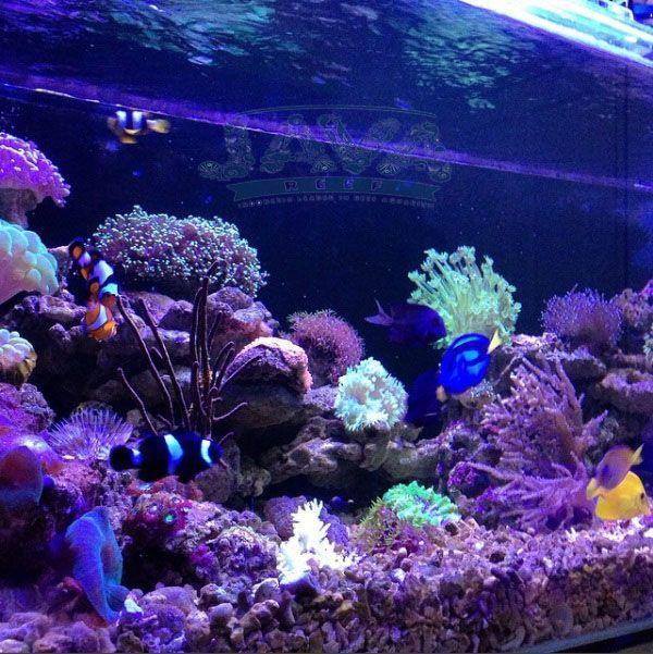 pembuatan aquarium air laut untuk apartemen di jakarta pusat