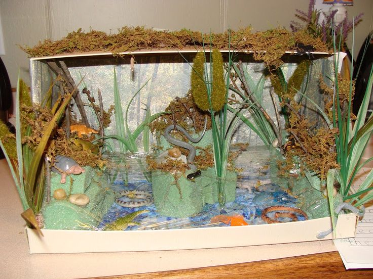Science Bioramas Biome Diorama Project Science