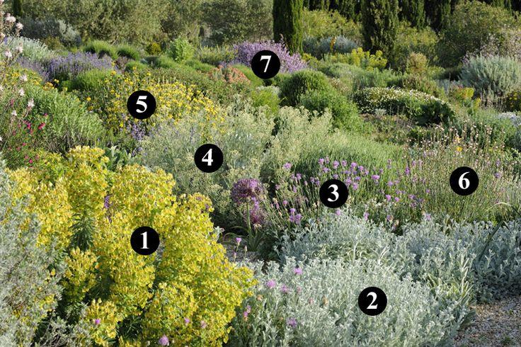 1 : Euphorbia characias subsp. wulfenii 2 : Tanacetum densum subsp. amanii 3 : Centaurea bella 4 : Senecio vira-vira 5 : Phlomis bourgaei 6 : Asphodelus fistulosus 7 : Salvia fruticosa