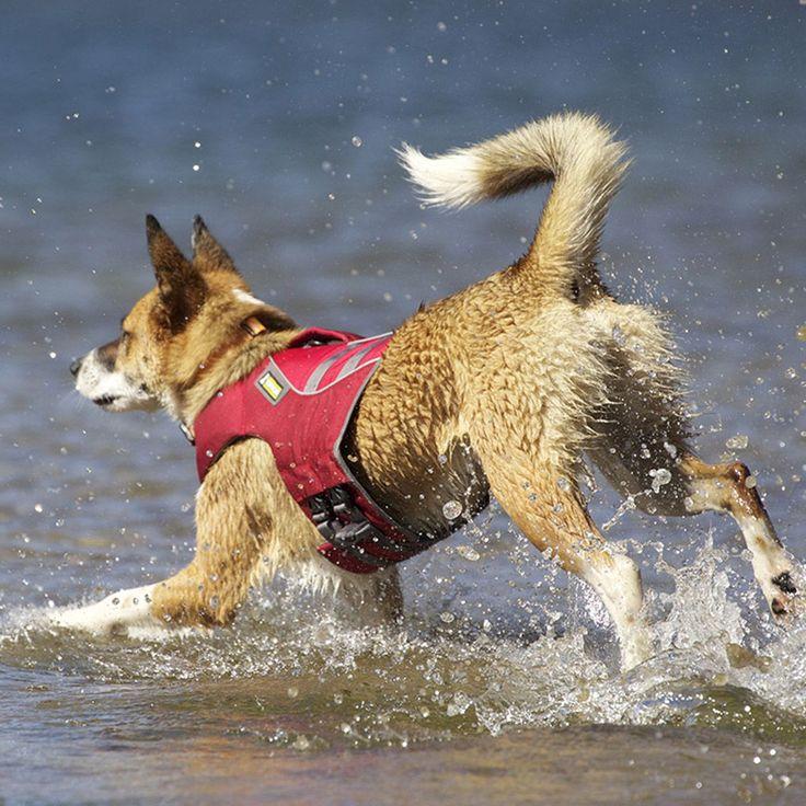 46 besten Shoppen für den Hund ;-) Bilder auf Pinterest | Hunde, Bye ...