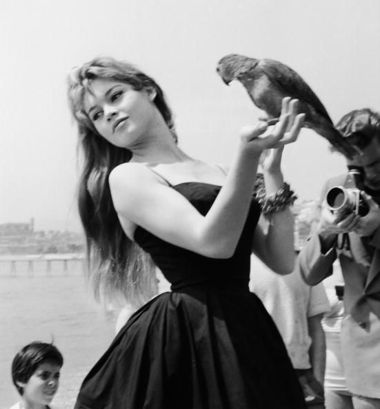 Memorable Moments at the Cannes Film Festival: Brigitte Bardot already knows exactly how to play it for the camera, in Cannes back in 1956.: Cannes Film Festivals, Celebrity Photos, Bardot Brigitte, Red Carpets, Poster, Icons, Brigitte Bardot, Brigittebardot, Black