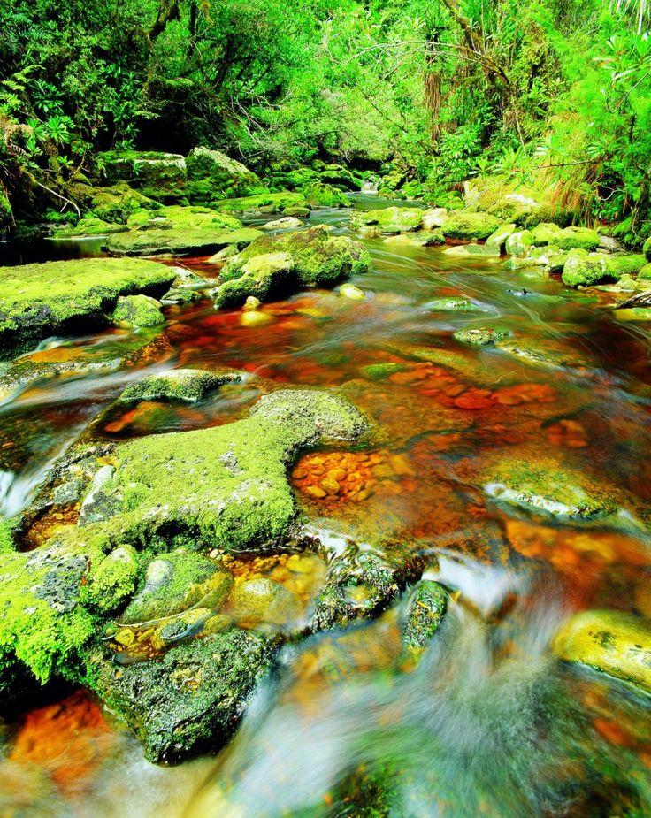 The rainforest of Tasmania