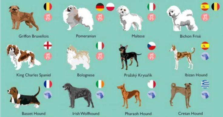 ¿Localizas aquí a tu perro en esta lista?