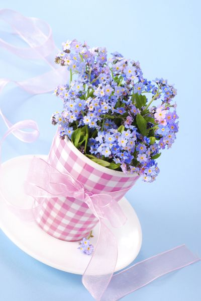 A mini bouquet of forget-me-nots in a paper cup. _ Ideal for an anniversary or mother's day dinner