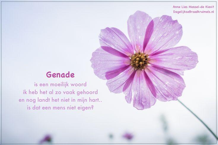 Gedicht 15, vrijdag 17 maart Genade is een moeilijk woord ik heb het al zo vaak gehoord en nog landt het niet in mijn hart.. is dat een mens niet eigen? Ik lees ervan, ik weet ervan en ik begrijp het nu en dan maar dan raak ik toch weer verward en kan ik enkel zwijgen Ik kies nog vaak mijn eigen... #Genade, #40Dagen  https://www.dagelijksebroodkruimels.nl/genade/