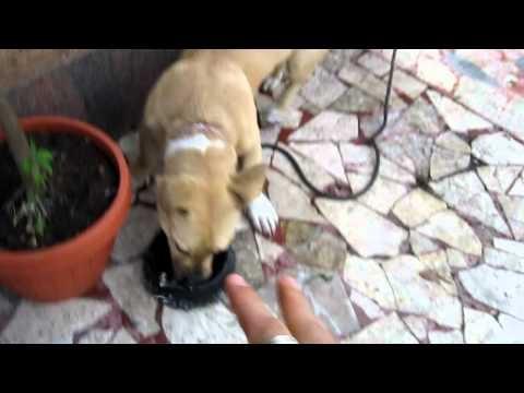 """かわいい犬 Puppy attacks water bowl:):):) funny!!!: """"Loveeeee this puppy"""""""