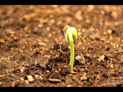 La germination - cycle de vie des plantes - Le petit cartable de Sanleane : avec des liens de vidéos accélérées de la germination