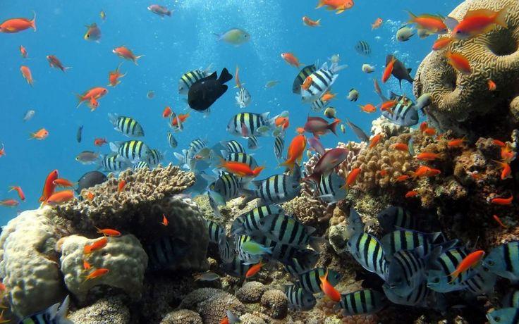 Peces en acuario para el fondo de Pantalla