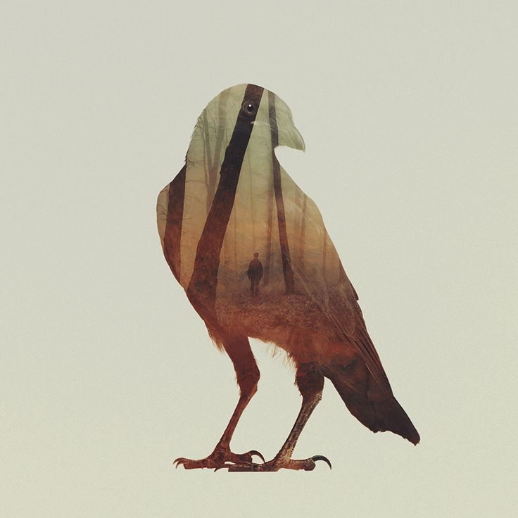 Andreas Lie : double exposures of animals and their habitats. Crows, my favorite.