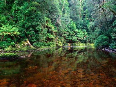 Rapid River in Rainforest Tarkine, Tasmania, Australia