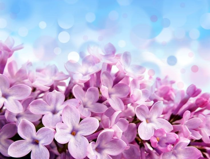 Pallido fiori rosso-viola, bellissimi fiori viola, blu, bianco di abbagliamento File vettoriale