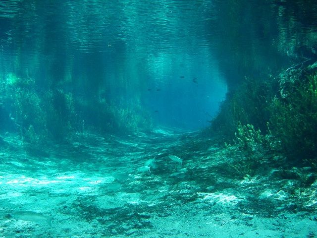 Ginnie Springs in Florida 10 Crystal Clear Natural Waters to Swim This Summer