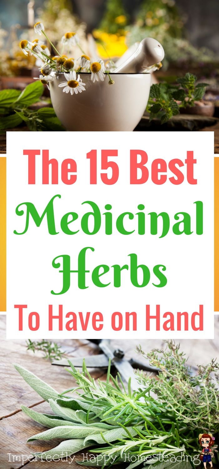 The 15 Best Medicinal Herbs to Always Have in the House. For the home herbalist and those wanting to treat ailments naturally.