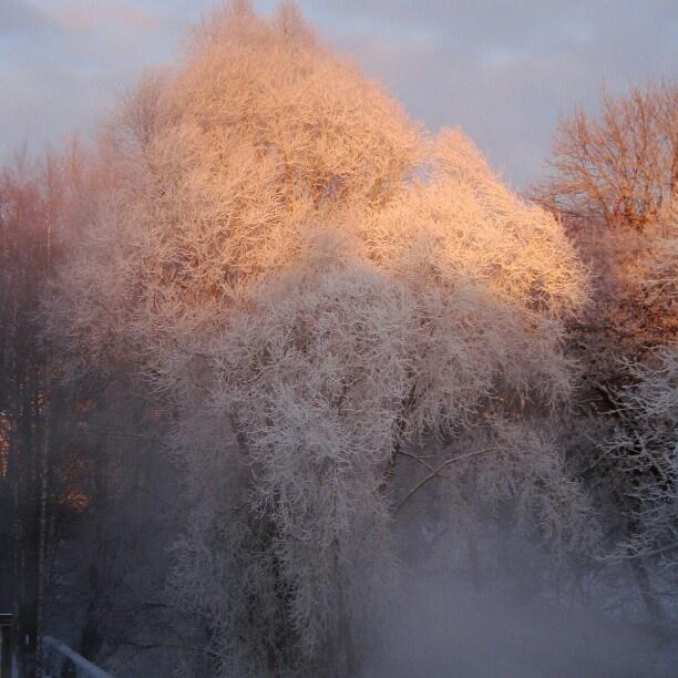 White Winter wonderland in Sweden.