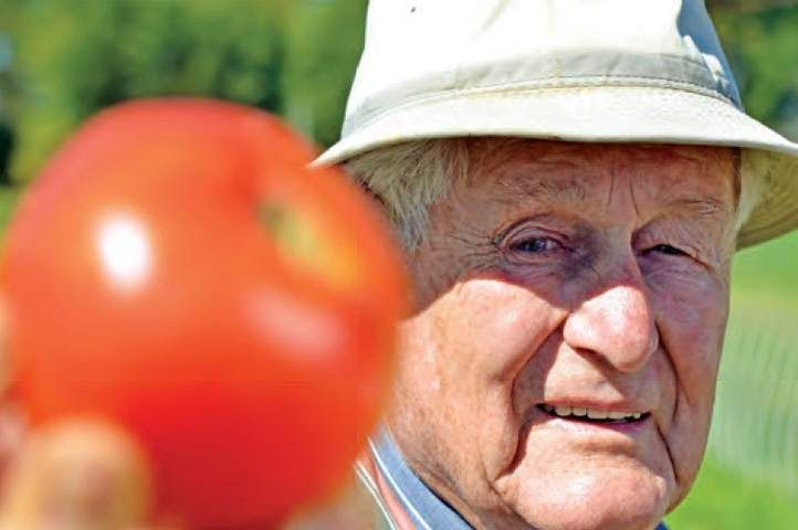 WVU professor develops tomatoes resistant to fungus, blight -  MORGANTOWN — Mannon Gallegly, West Virginia University professor emeritus of plant pathology, has made it his mission to develop a disease-free tomato.