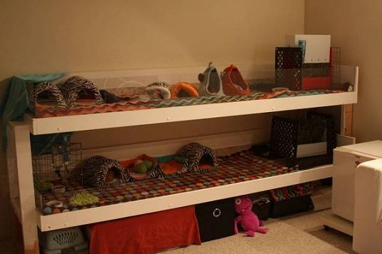 17 best images about pets on pinterest pvc pipes cavy for Guinea pig cage made from bookshelf