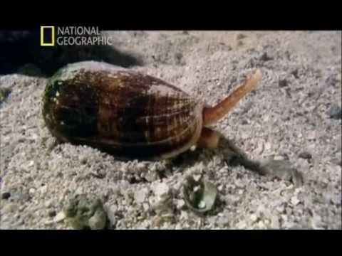 Las 10 playas más peligrosas del mundo - YouTube