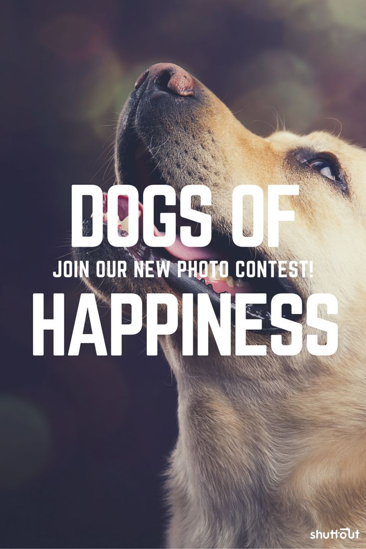 Love taking pictures of #dogs? Join our free photography contest on Shuttout. Test our platform, where soon you'll be able to change your social likes & comments into real money through social photography contests.  #dog #contest #photo #doggy #puppy #competition #photography