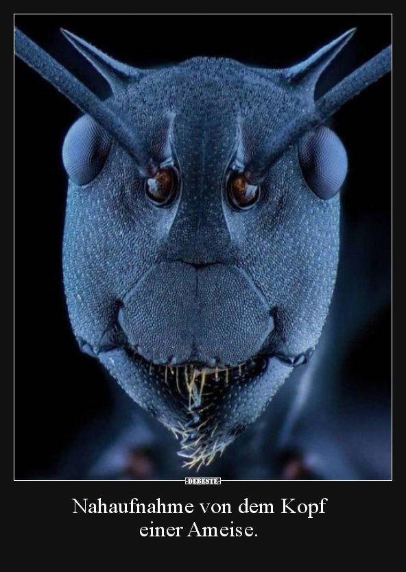 Nahaufnahme von dem Kopf einer Ameise… | Lustige Bilder, Sprüche, Witze, echt lustig