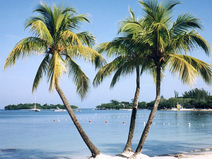Palm trees in Negril, Jamaica