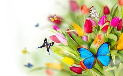 Butterflies and tulips wallpaper