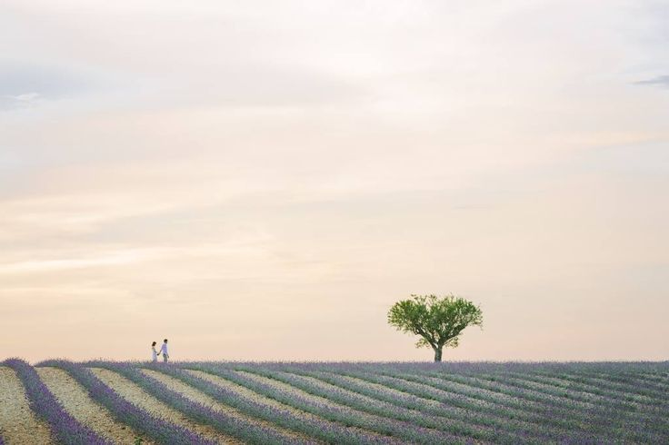 E-session in Provence #lavande #lavender #lavenderfield #portraitsession #studioaq #couples #seanceengagement #esession