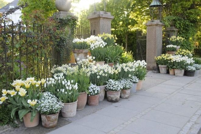 white in pots