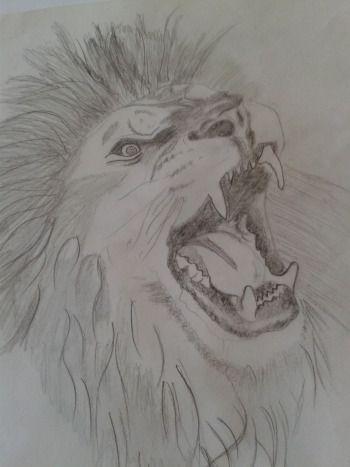 Lion Sketch  2013