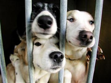 This petition is to stop a massive cull of shelter dog's in Portugal please sign and share  Petição para o fim dos canis de Abate em Portugal : Petição Pública