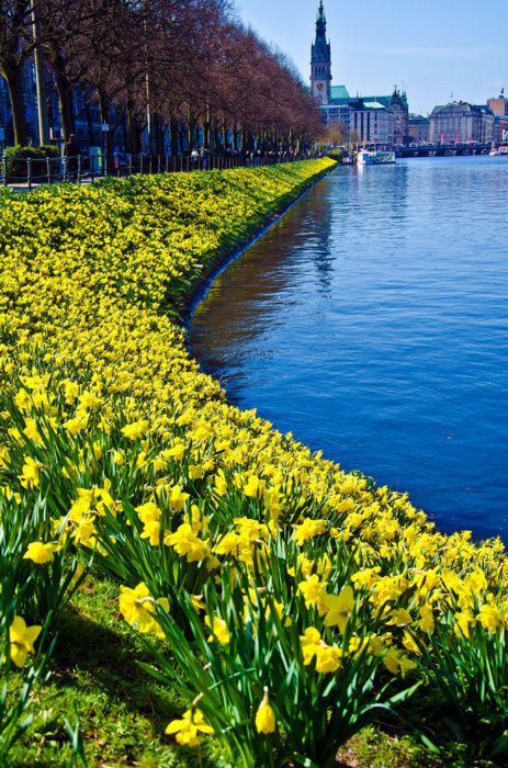 Spring flowers in Hamburg, Germany Europe is alive in Spring! www.RiverCruiseGuru.com for free assistance with your river cruise.