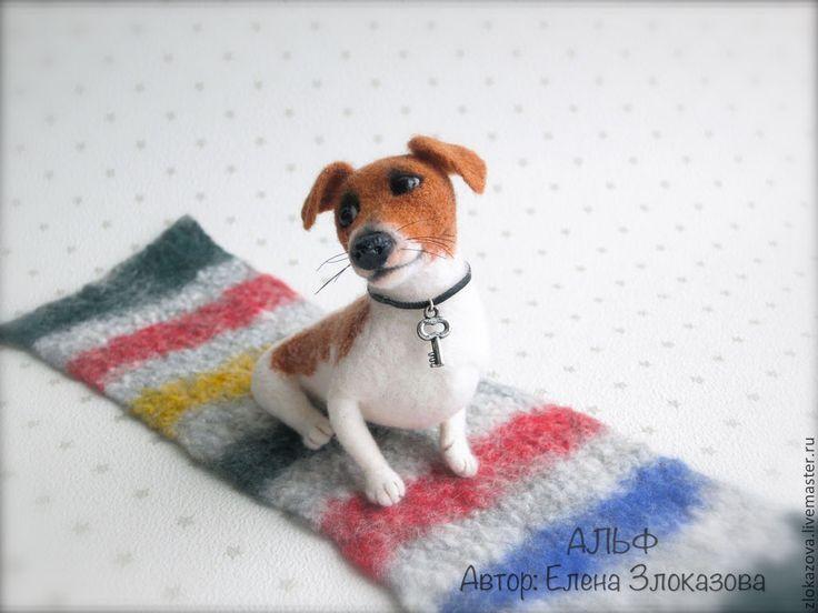 Джек рассел терьер Альф - коричневый, белый, джек рассел терьер, собачка, собака