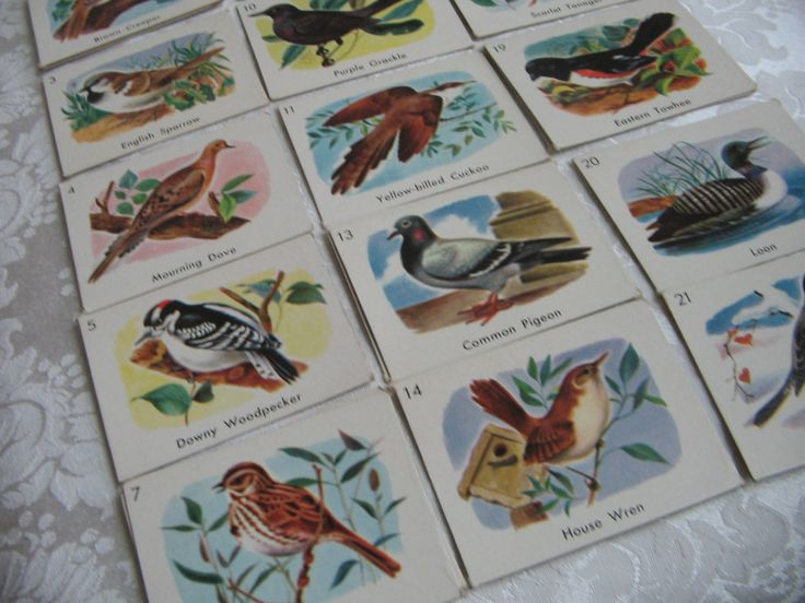 Vintage Bird Cards Lot of 61 Color Pictures On Cardboard With 48 Different Birds, Educational Teaching Aid, Paper Ephemera Art Supplies by vintagenowandthen on Etsy