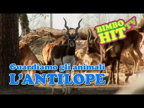Guardiamo Gli Animali: L'Antilope - Bimbo Hit Tv #wildlife #animali #africa #nature #documentario