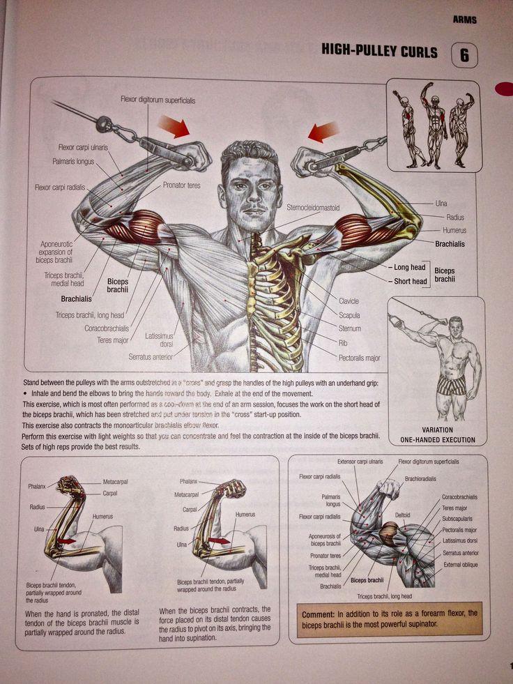 Fancy Womens Strength Training Anatomy Sketch - Human Anatomy Images ...