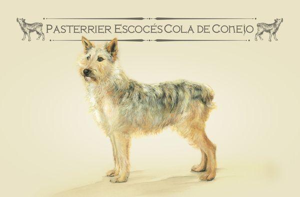 http://elmeme.me/santiago_sarceda/razas-unicas-una-campana-para-alentar-la-adopcion-de-perros-callejeros-de-razas-mixtas_4840