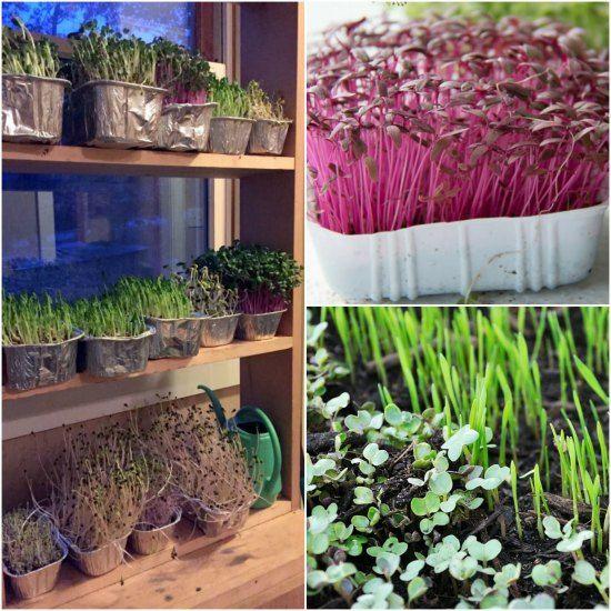 How To Build An Indoor Gardening Shelf For Year-Round Salad Gardening