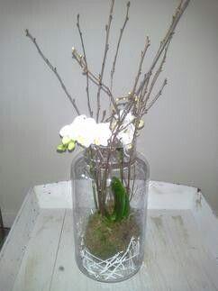 Orchide plant in glazen pot gezet