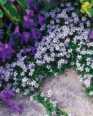 Pick the Perfect Purple | Fine Gardening