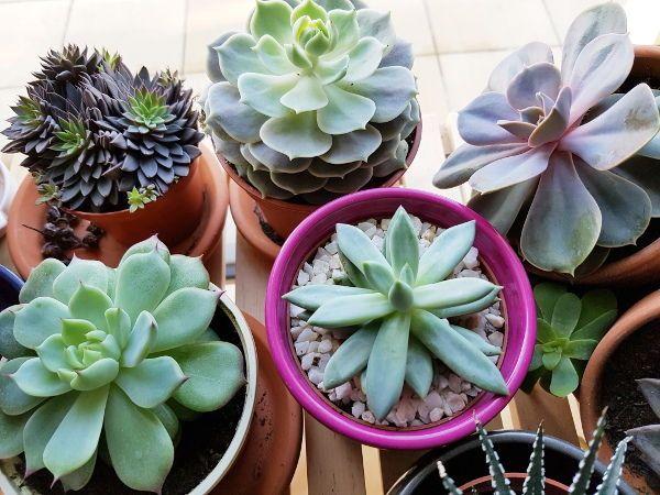 Ma Methode Pour Conserver Les Succulentes Cactus Et Plantes