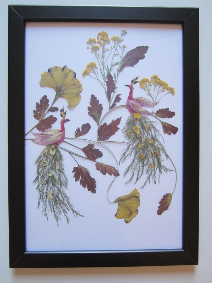 17 best ideas about pressed flower art on pinterest for Dried flowers for crafts