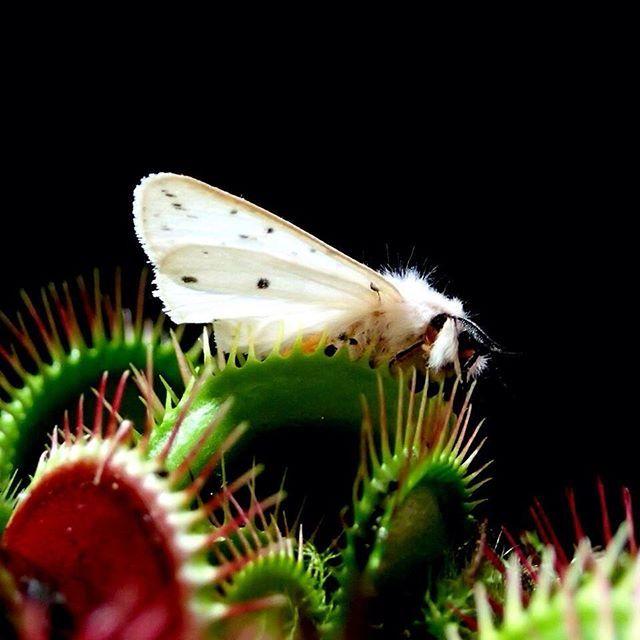 Mouche dans les plantes 28 images infos utiles plantes et insectes b 233 n 233 fiques pour - Tarif grille euromillion ...
