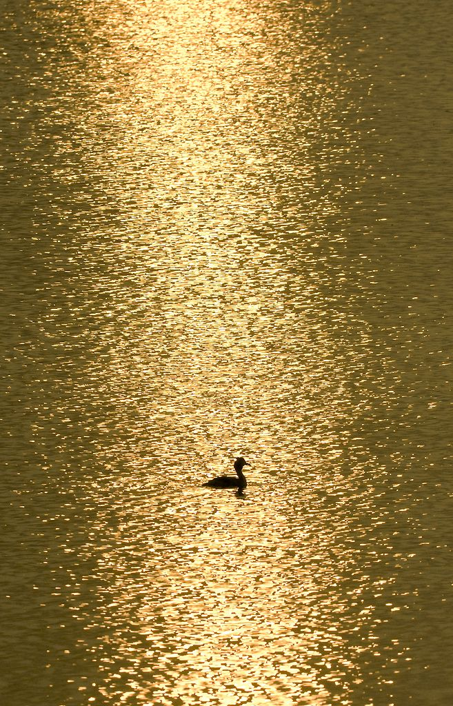 Golden Sunset on the Water | The Amazing Beauty of Nature | Lac Du Der - Chantecoq France | #sunset #sunset_photography #lac_du_dur #sunset: