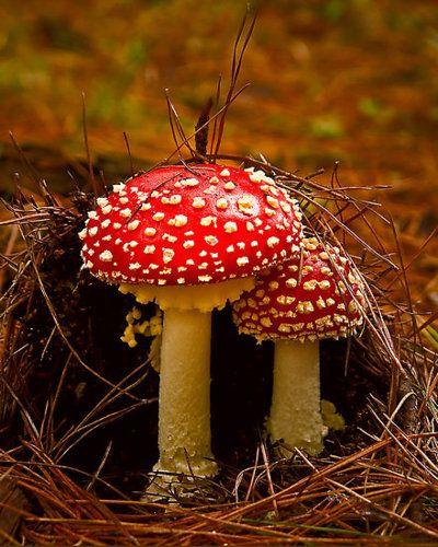 autumn on the forest floor  #mushrooms #fungi