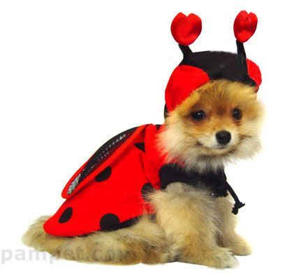 Lady Bug - too cute