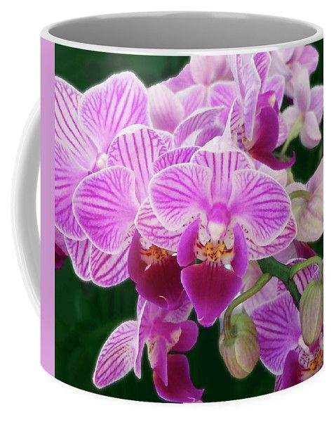Orchids on the coffeemug.